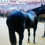 Quando il cavallo dice NO e vince