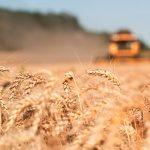 Allarme cibo: prospettive di fame a livello globale
