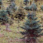 La strategia degli alberi