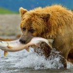 Vi piace il Salmone ?