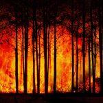 L' Amazzonia e il nostro stile di vita, il Pianeta muore