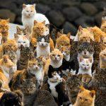 In Toscana la prima Woodstock dei gatti