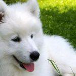 La storia del Cane angelo e dei suoi massacratori
