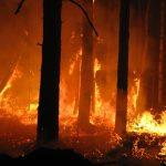 Gli incendi chiamano i soldi