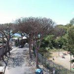 La malattia dei pini non colpisce solo Napoli