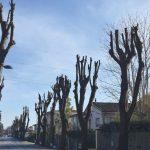 Alberi…lo strazio della potatura